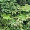 Large ferns line the gorge of Catarata del Toro.