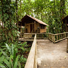 Cabins at the Rana Roja Lodge in Tortuguero National Park.
