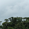 The canopy of the rain forest over Catarata del Toro, as more rain is about to fall.  Central Highlands, Costa Rica.