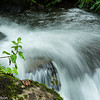 A small waterfall on a hiking trail in the cloud forest of Bosque de Paz preserve.