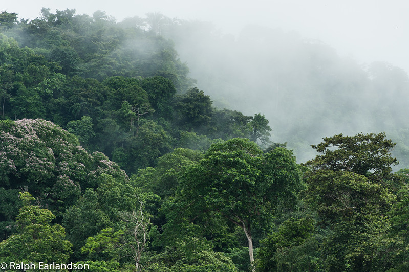 Low clouds over the rain forest in Tortuguero National Park.