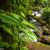 Streamside along a hiking trail at La Paz Waterfall Gardens.