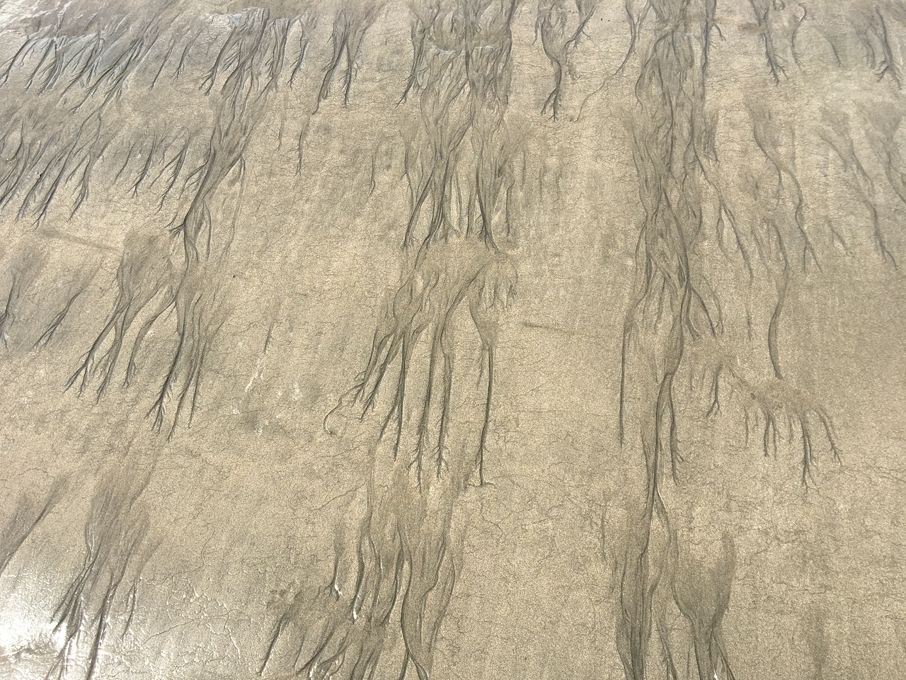 Patterns on the Sand