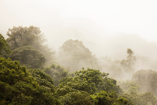 Mist in the Cloud Rainforest