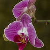 Many Beautiful Orchids found in Costa Rica.