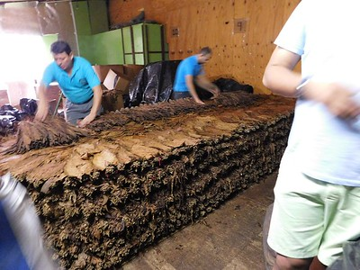 Touring Tobacos de Costa Rica. This cigar factory is just 30 minutes from Chris' dad's house. Here workers are stacking the tobacco leaf to allow it to ferment and age.