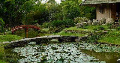 Japanese garden in Lankester Botanical Garden