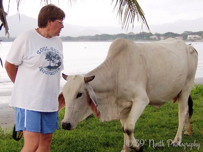 "Angie said, ""Hey look, the cow wants you to pet it!"""