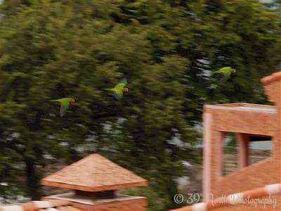 Unknown parrots