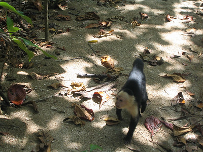 monkey want food