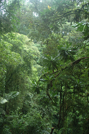 129 1 - Rain forest in Hanging bridges