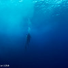 Diver in surge - Coco's islands by Tracey Jennings