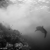 Whale sharks - Coco's Islands by Tracey Jennings