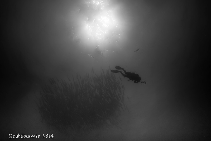 Diver silhouette - Coco's islands by Tracey Jennings