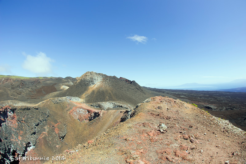 Isabela - Galapagos by Tracey Jennings