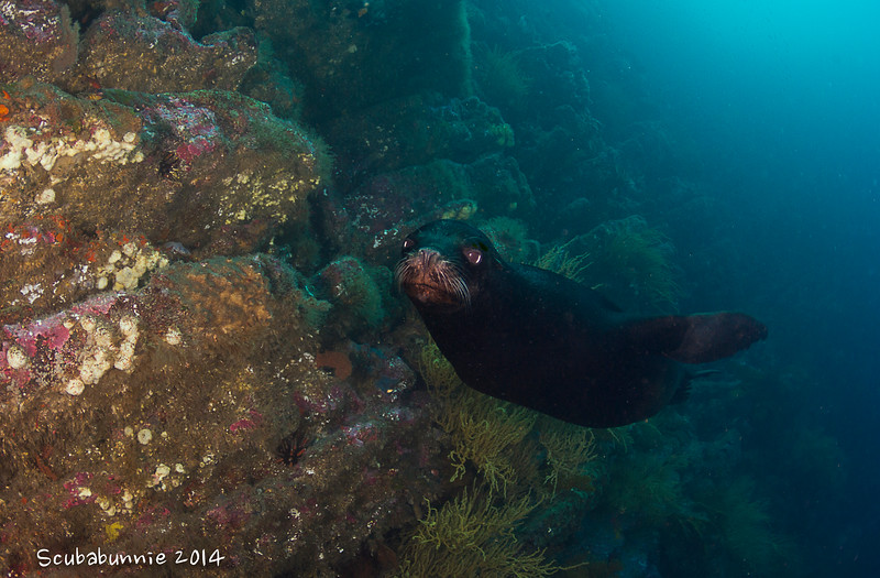 Galapagos Sea lion - Galapagos by Tracey Jennings