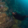 Galapagos Sea lion - Galapagos by Tracey Jennings