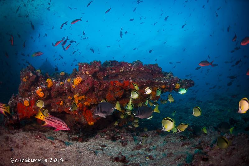 Aquarium - Galapagos by Tracey Jennings