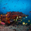 Aquarium - Galapagos by Tracey Jennings