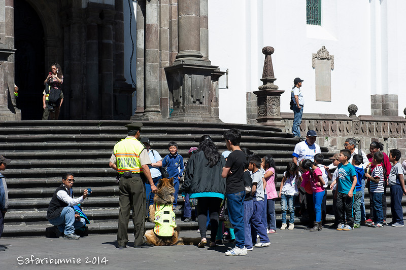 Police dogs - Quito by Tracey Jennings