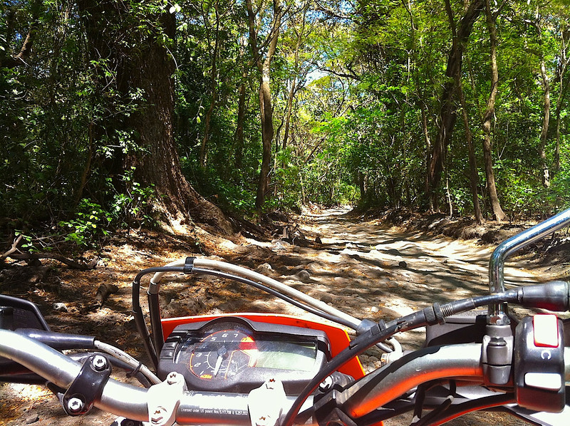 This is part or the 7 KM trail you have take to get to the beach in Santa Rosa National Park.
