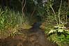Tropical Cloud Forest. Santa Maria National Park Costa Rica.