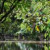 CR Aninga River Trip 023