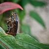 CR Butterfly 019