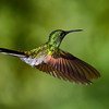CR Humming Birds 025