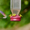 CR Humming Birds 022