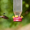 CR Humming Birds 023