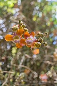 Casa Orquideas Botanical Garden
