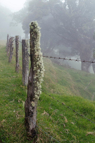 Cloud Forest Fence