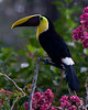 A Toucan And Flowers