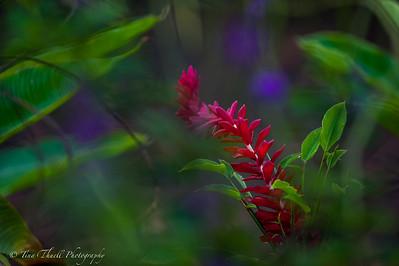 Stunning Costa Rica Jungle Flower