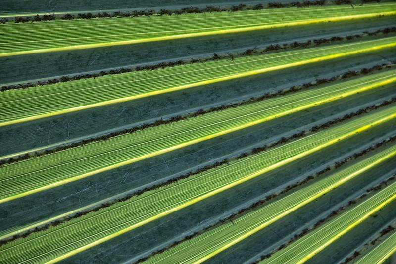 Backlit palm.