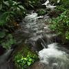 Stream, Bosque de Paz