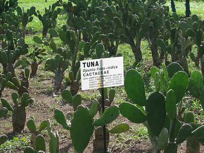 medicinal plants at Earth Univ