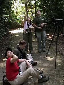 La Selva Bird Watching