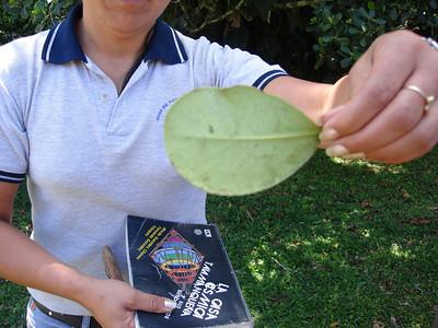 Mystery leaf...