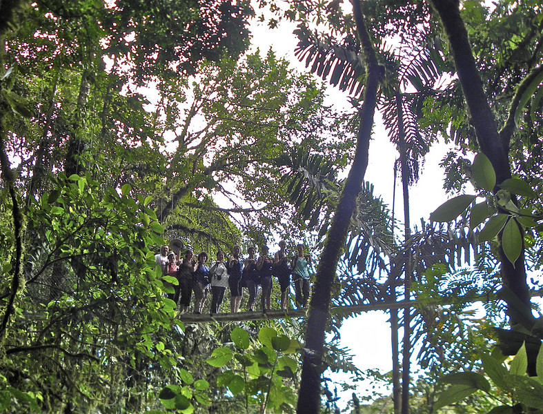 Strange creatures in the canopy.