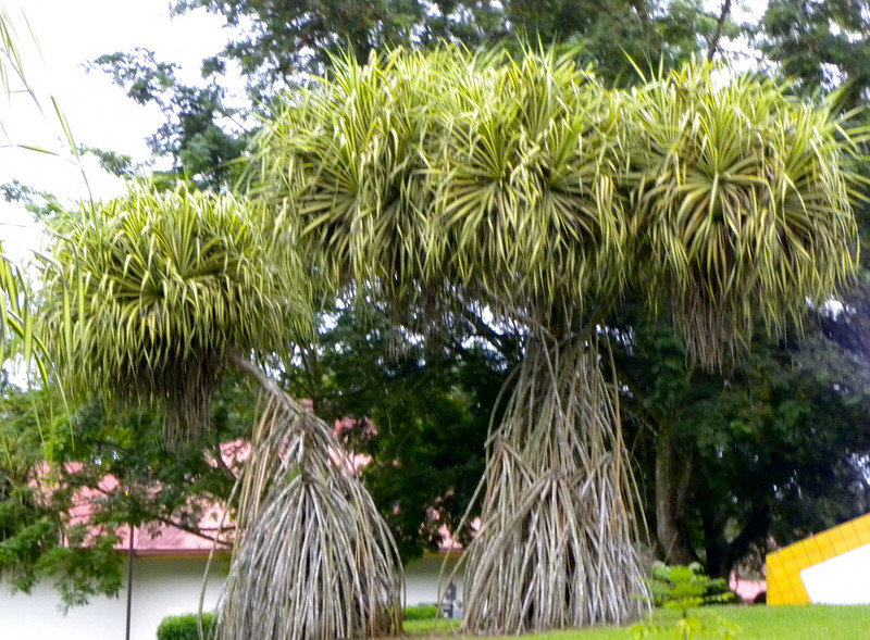 Truffula Trees....Dr. Seuss inspiration.