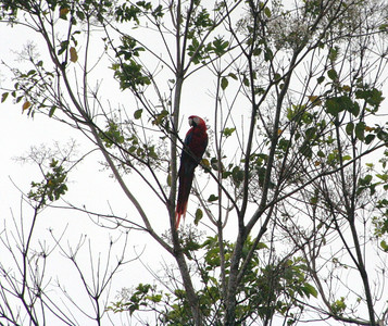Two macaws greeted us upon arrival to the rainforest in Osa.