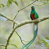 RJB_2359 Resplendent Quetzal 800 x 1200 web