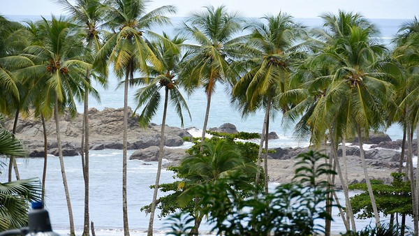Costa Rica 2015 Seascapes, Marine Life, Whales