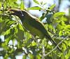 Emerald_Tourcanette_Costa_Rica_2004_0001