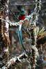 Quetzal5 (2)