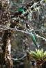 Quetzal10 (2)