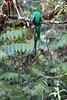 Quetzal18 (2)
