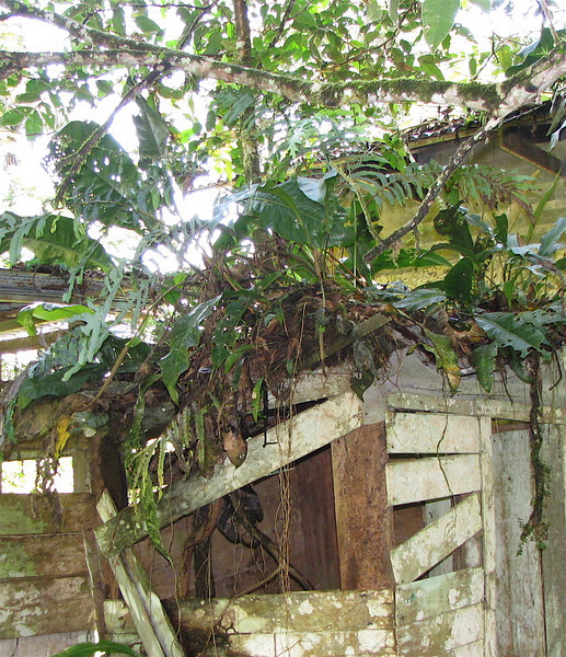 La Selva - Shed In Front Of House With Tree Growing On Roof
